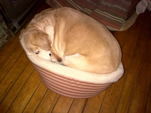 Just too cute not to share: the new bed for our 30 pound dog has been hijacked. http://t.co/6ZVGv6ql