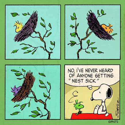 Peanuts On Twitter Windy Days Are Tough For At Woodstock Httpt
