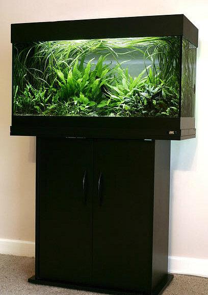 george farmer on twitter juwel aquarium my first ever aquarium was a juwel rio 125 bought in. Black Bedroom Furniture Sets. Home Design Ideas