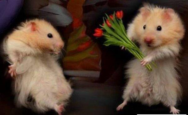 hamsters xxx