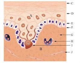 #5النظرية التدميرية فيها يتم تدمير الخلايا الصبغية لنفسها حيث تهدم الخلايا المكونة للمواد الملونة للجلد نفسها ذاتيا http://pic.twitter.com/nM5z1MW3