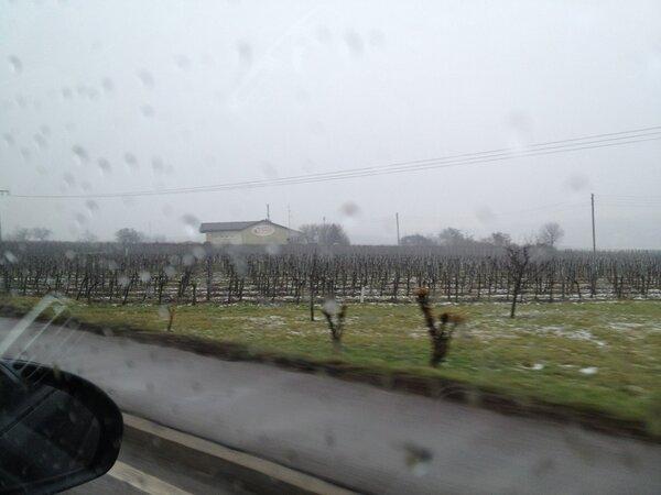 Und los geht's zum #kultup durch die nebligen Weinberge! http://pic.twitter.com/jGljBKUL