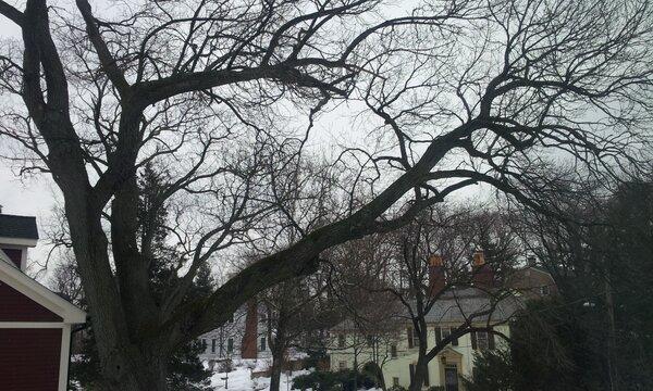 寒いなぁと思ったら0°Cだった。@ボストン http://t.co/NyTZimrr
