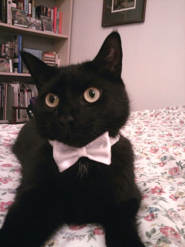 Adorable! RT @sarahblask: Oliver is ready for the season finale of #DowntonPBS! http://pic.twitter.com/W8p62mQa
