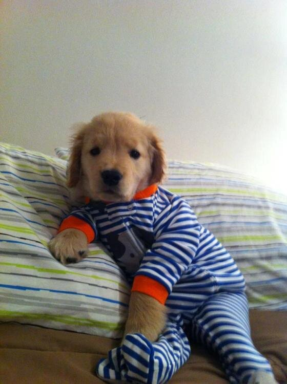 Puppy in jammies