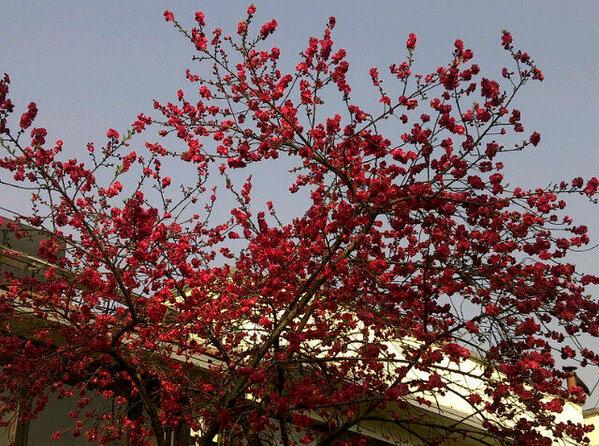 Image result for Kathmandu spring image