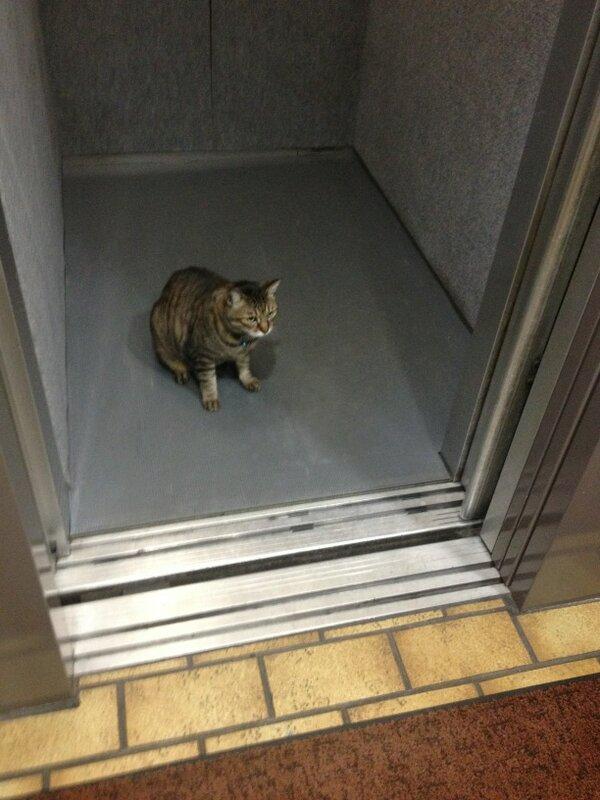 エレベーターのドアがあいたら猫がいた。 pic.twitter.com/fkY9OXGETZ