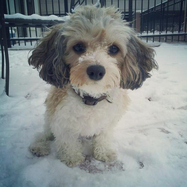 @MarnieLevy @capitalweather I Rrrr-ove the snow. I'm hoping #snowquester provides plenty of snow and playtime for me http://pic.twitter.com/njGifThAI5