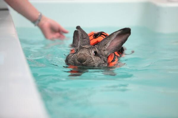 buzzfeed animals on twitter swimming bunny swimmingbunny http