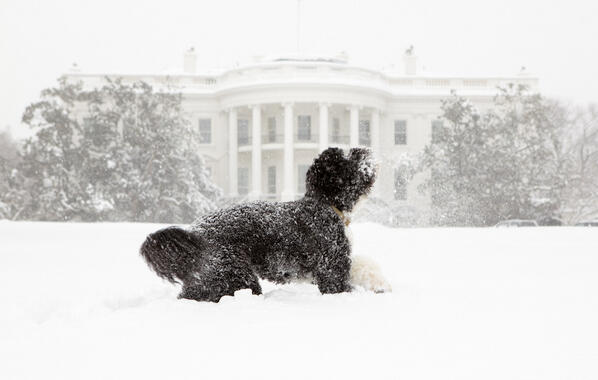 Twitter / whitehouse: From the Archives: Bo plays ...