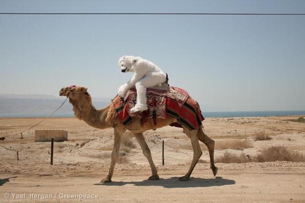 Image result for camel fossil