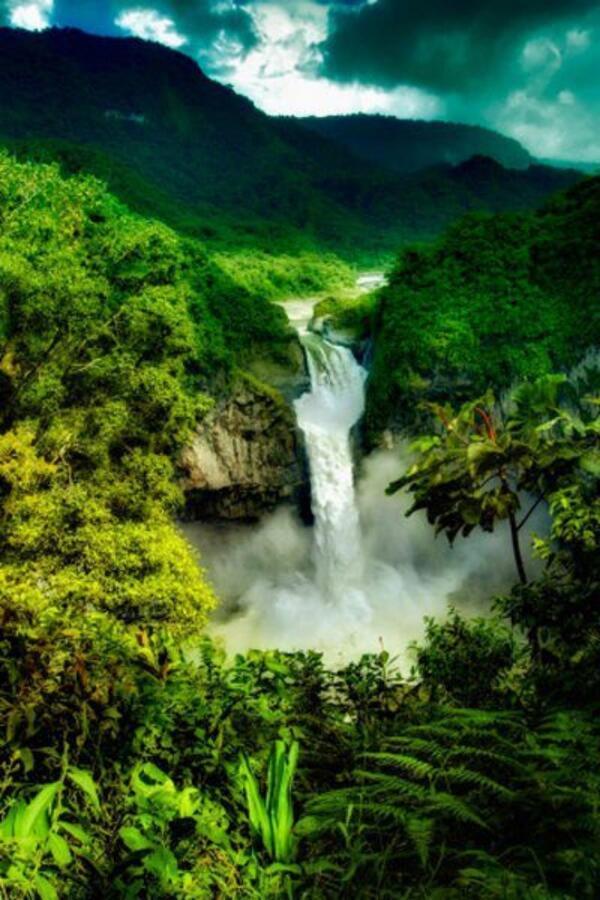 amazon rainforest south america - photo #6