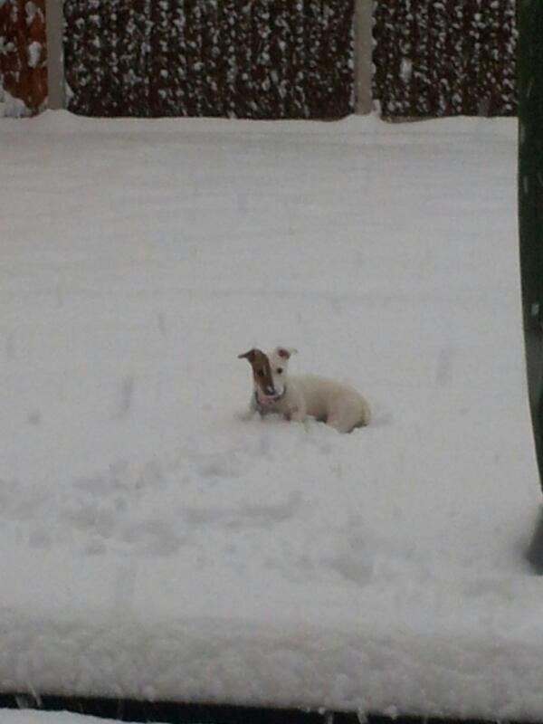 @dailypostwales my dog Poppy loves the snow http://t.co/qZBboxfeao