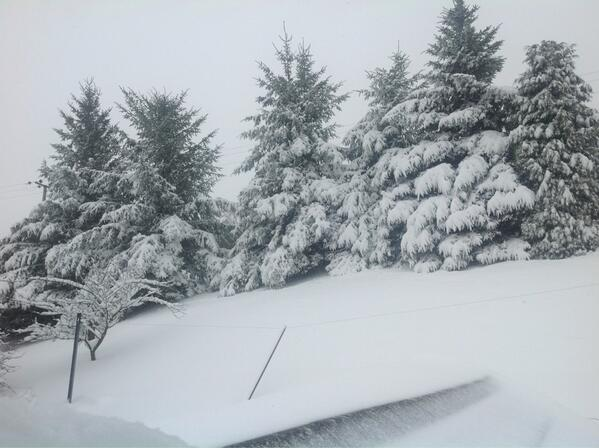 @debjam @dailypostwales This is the top of our garden... http://t.co/xGwKvXCf5F