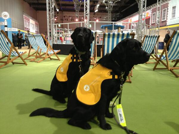 Dementia Dog at the National Health Expo #dementiachallenge http://pic.twitter.com/k8berJPQI9