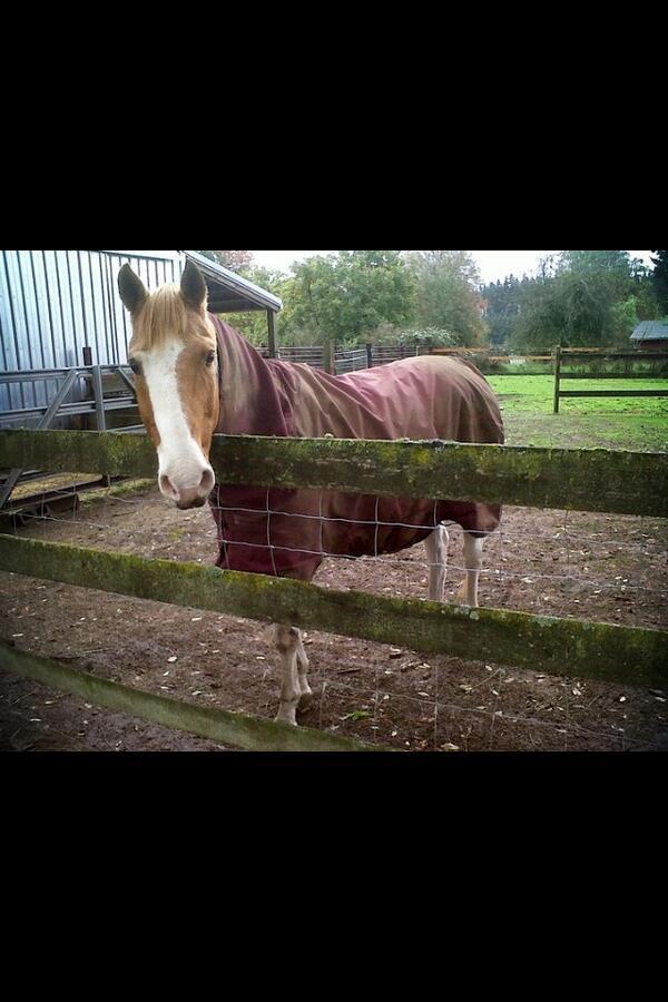 @Horseware my boy rocking his Rambo Quarter Horse blanket #rugsforlife pic.twitter.com/UEyY3E8xtq