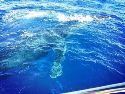 Twitter / BrandFlair: Nice site. Mama Humpback Whale ...