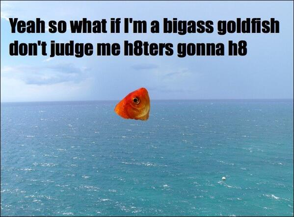Tropical Fish Memes Fishmemes Twitter