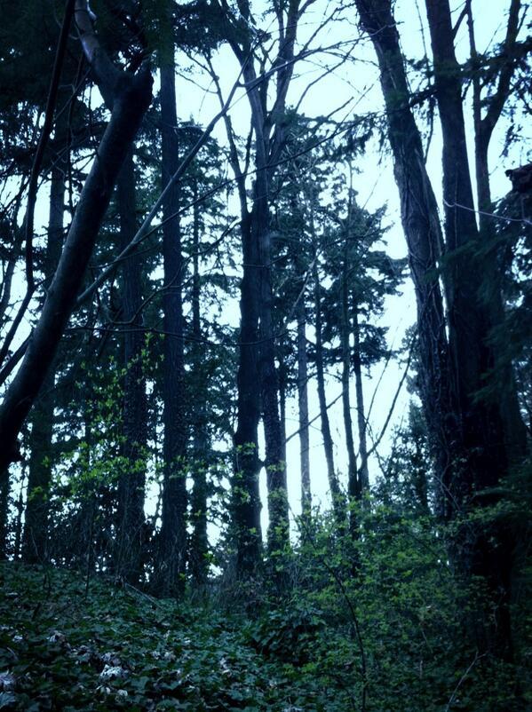 Took a walk in the woods on Summerisle. #TEDxSummerisle http://pic.twitter.com/rTvAXWz4gH