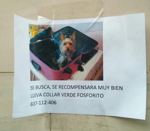 Twitter / Necro_Lord: Perro perdido. #Albacete zona ...