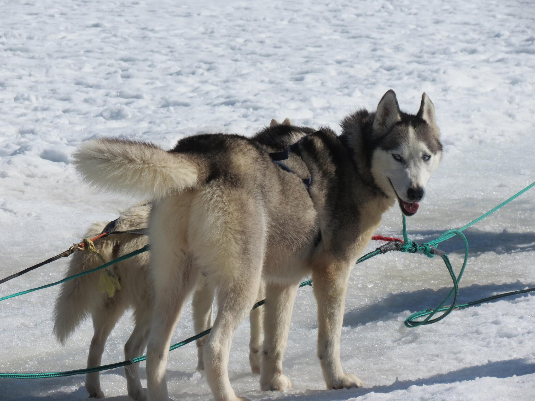 Twitter / TheWrldWanderer: Writing about my #dogsledding ...