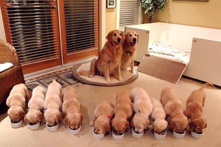 子供たちのご飯は大変だわ。。。 pic.twitter.com/tSHHuTfnPI これは大変だ...