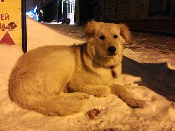 Собака ждет своего хозяина уже сутки. К себе не подпускает. На нем есть жетон. Давайте найдем хозяина, замерзнет RT http://t.co/UipJutJP1L