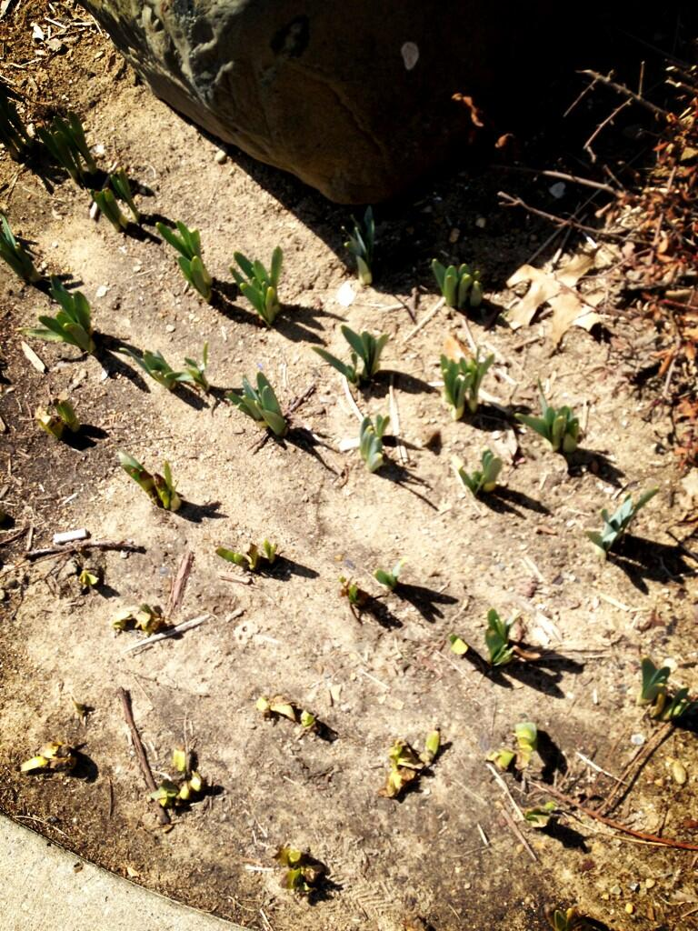 Twitter / EAHarter: Proof that Spring is coming ...