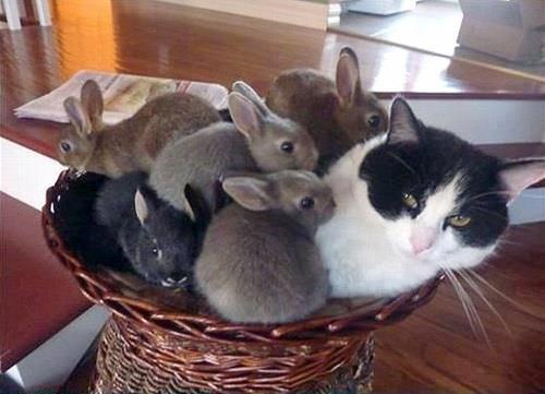Résultats de recherche d'images pour «easter cat»