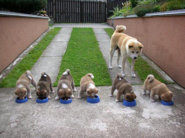 みんな残さず食べるんですよー pic.twitter.com/mhNuxQna2e 六つ子だ