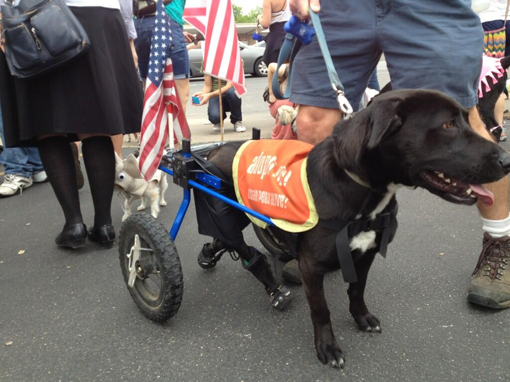 Twitter / OHSAYUSA: Dog Parade in Austin ...