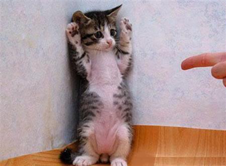 撃たにゃいで。RT @catpic11: 手を挙げろ! http://t.co/3ZW6fGC5qt