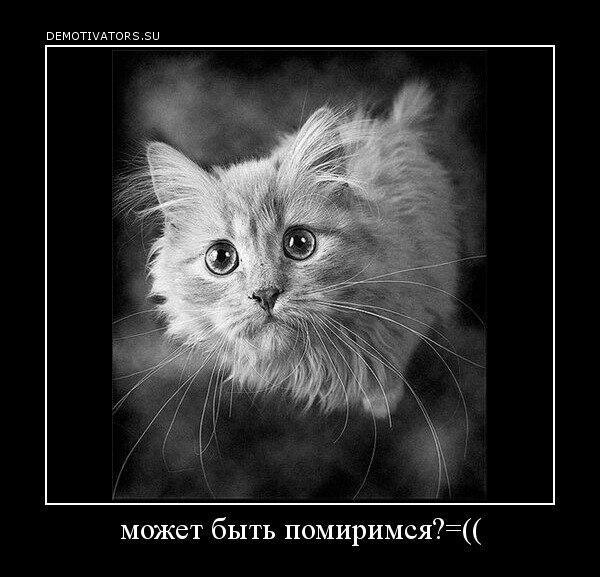 Котики, открытки чтобы помирится