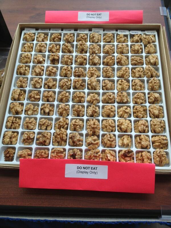 Yes, we have walnut varieties...for display only! #ucdavis pic.twitter.com/PodKl7s3vv