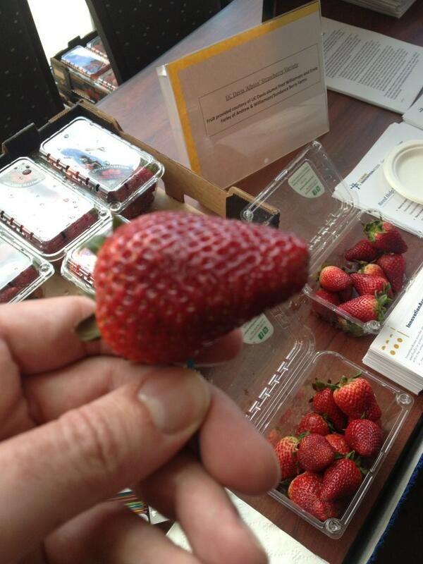 You can, however eat these Albion variety strawberries. #ucdavis pic.twitter.com/7eGBYImHDO