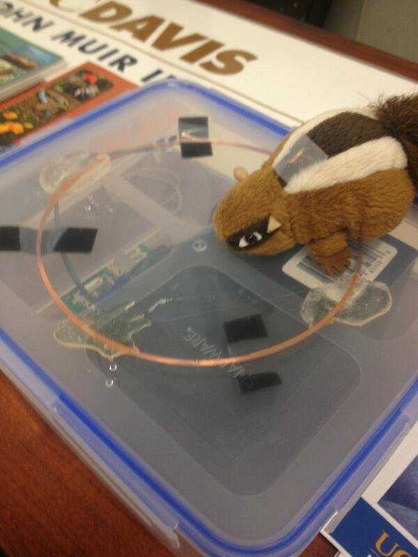 Demonstrating RFID tags for small mammals at the JMIE table, Office of Research open house pic.twitter.com/1xV0hG1PND