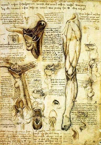 Twitter / KeelNeusOor: Mooie anatomische plaat van ...