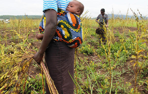 #MDGMomentum: agricultural projects in DR #Congo help people tackle hunger & poverty #MDG1 http://pic.twitter.com/qctKjH0cSg