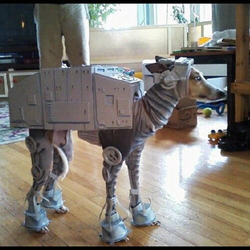 ロボット犬 pic.twitter.com/RP9XJdw3Q9 似合いすぎw