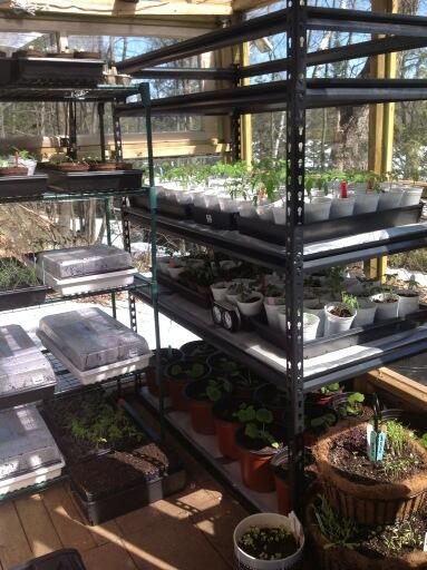 Twitter / phdinparenting: Opened the greenhouse today. ...
