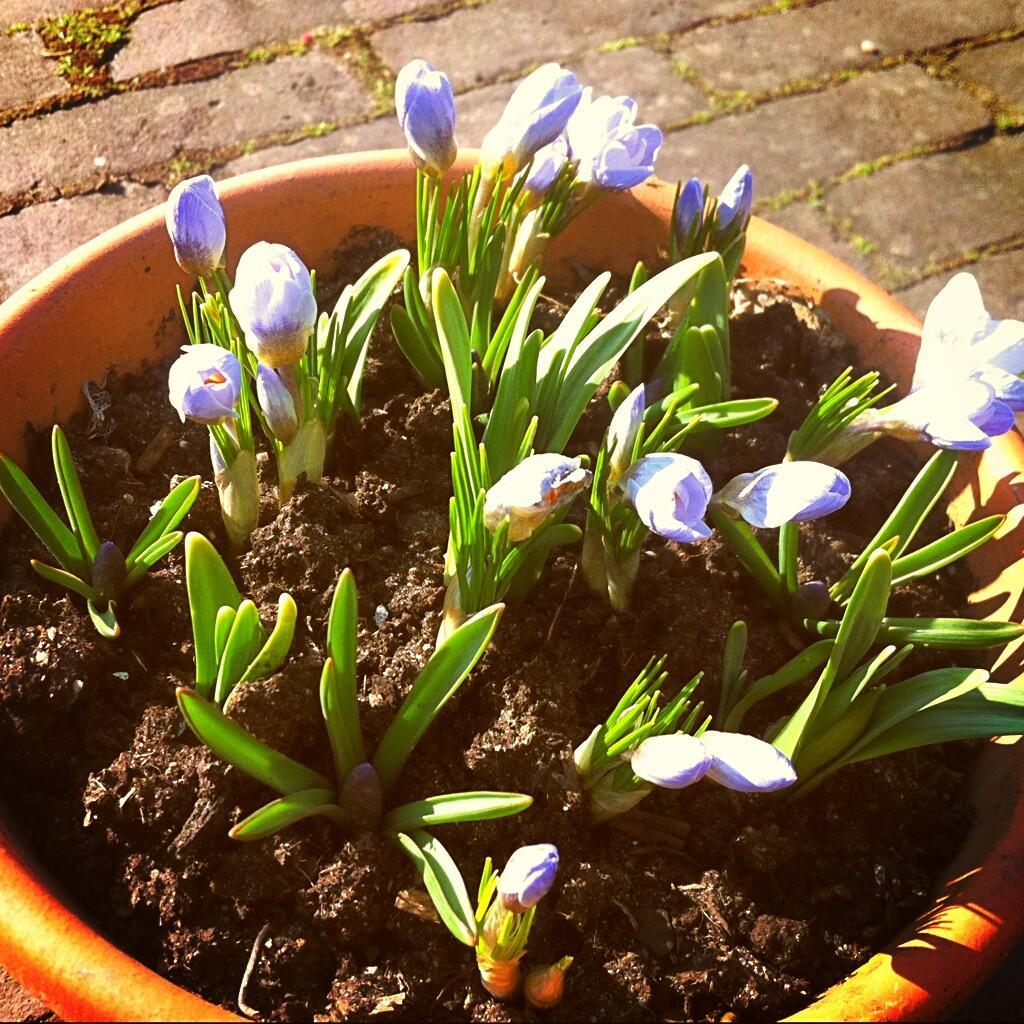 Twitter / xandercoolen: De #lente begint ook in onze ...