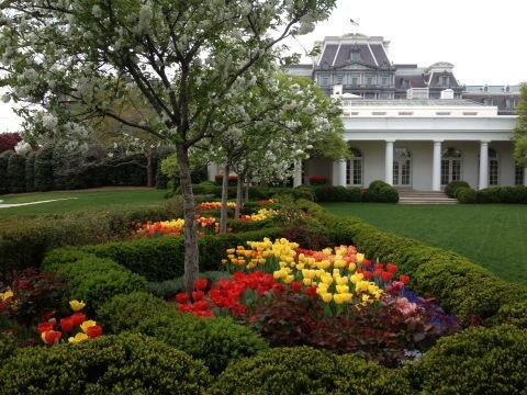 White House Rose Garden In Full Bloom
