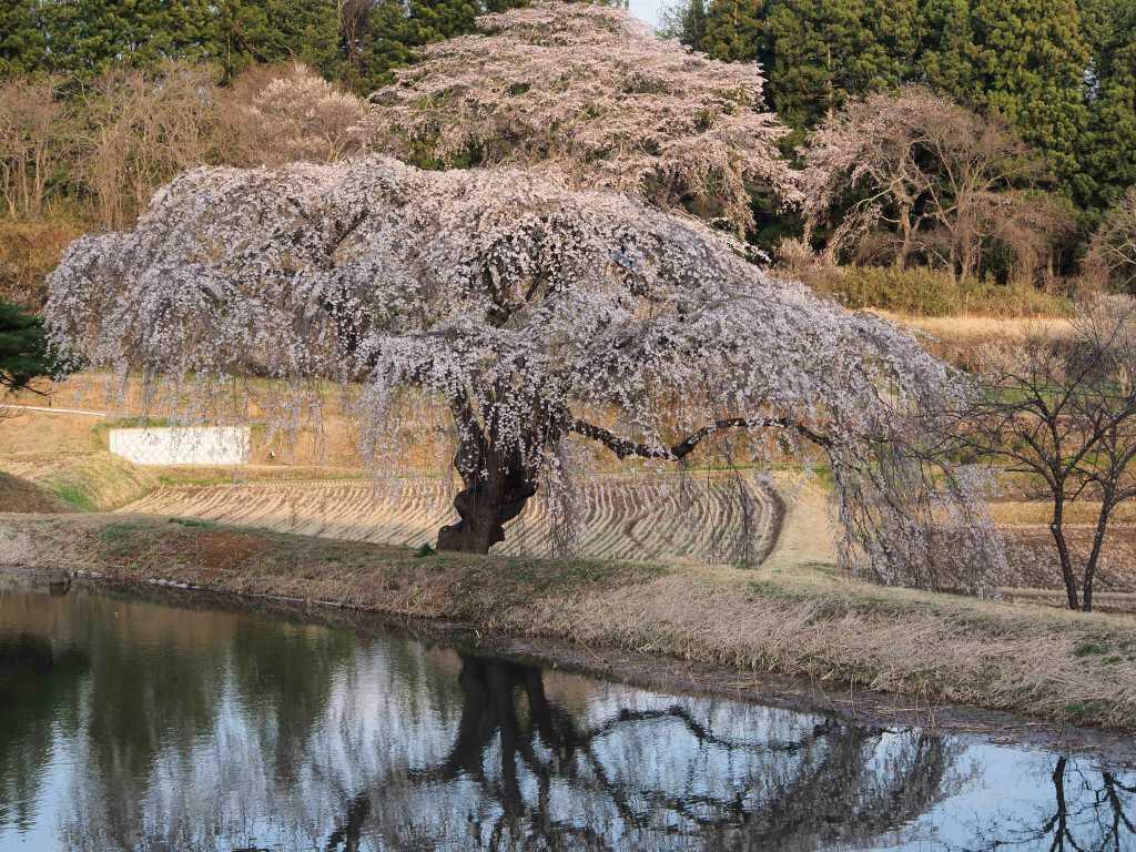 花園の桜〜写点の消失
