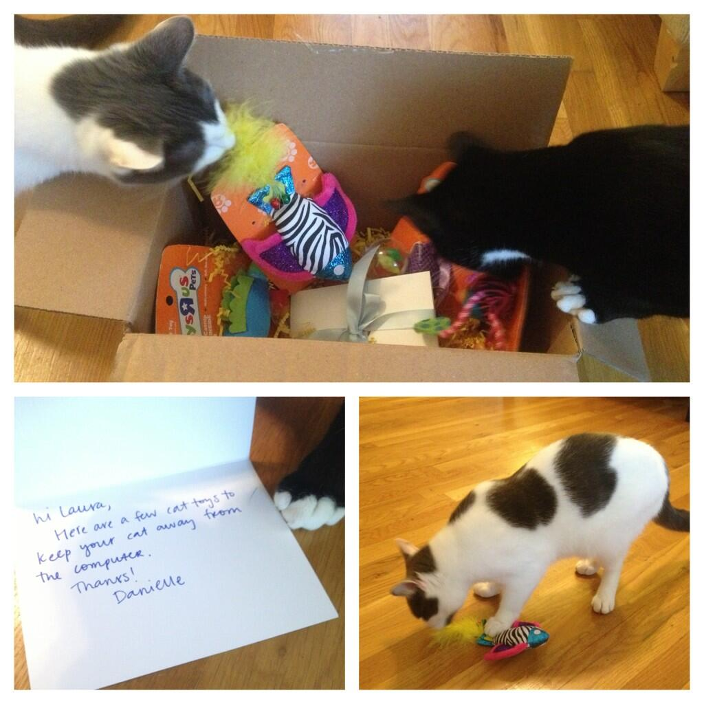 Twitter / LauraJMoss: The kitties love their new ...