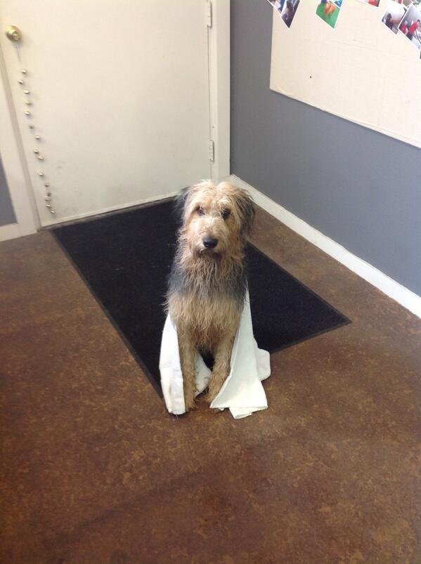 Cosmic dog cosmicdogshop twitter 0 replies 0 retweets 1 like solutioingenieria Choice Image