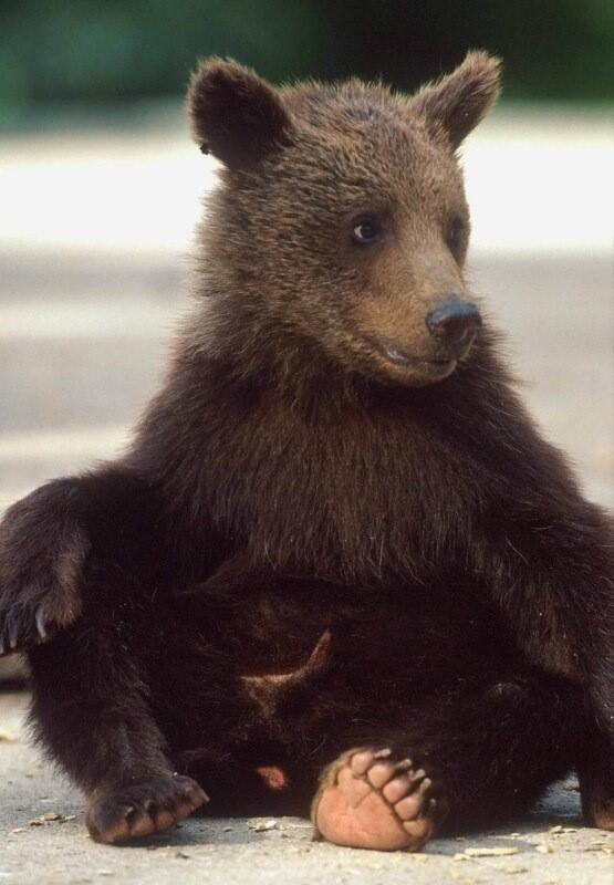 Папе февраля, медведь картинки прикольные с надписями