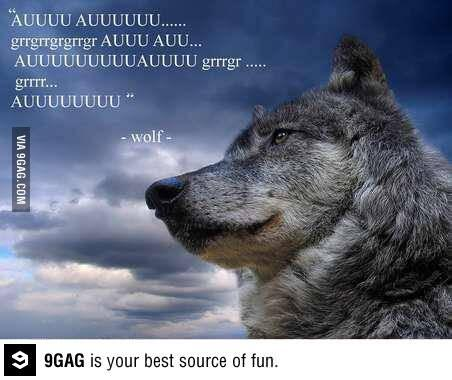 Wolf Quotes | 9gag On Twitter Wolf Quotes Http T Co Rpjtnwdn09