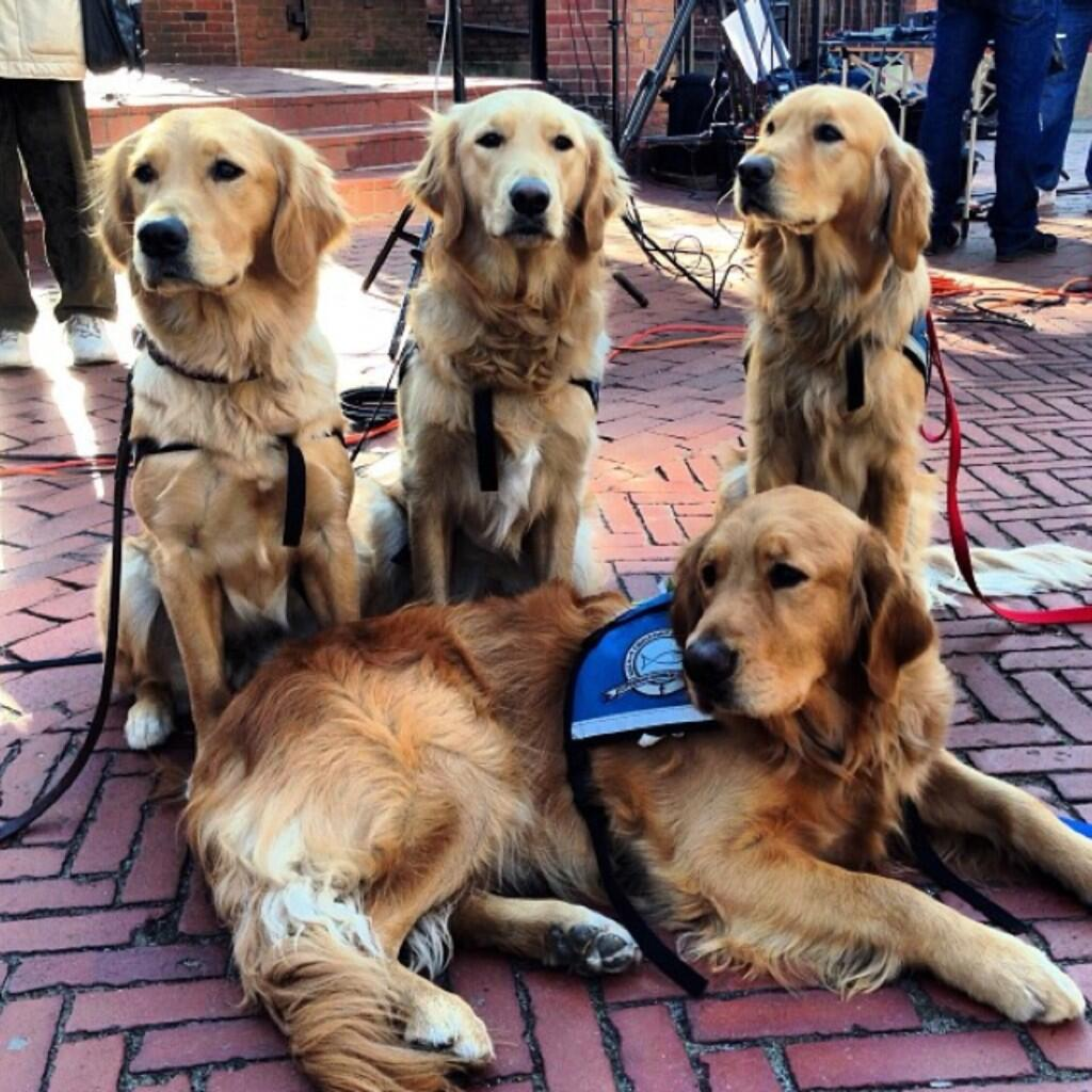 Twitter / krupali: Comfort dogs make it to Boston. ...