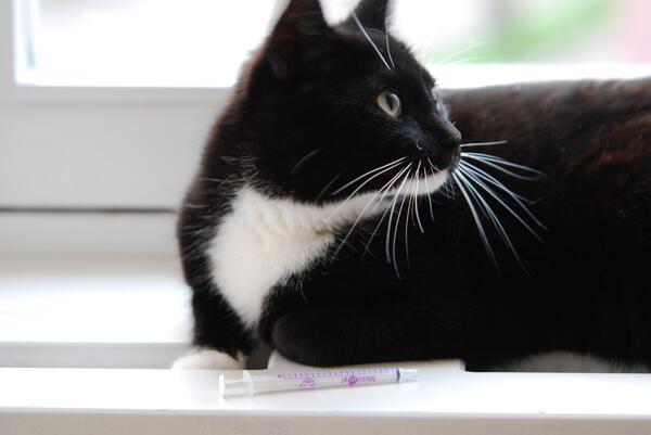 kattenvoer blaasgruis voorkomend