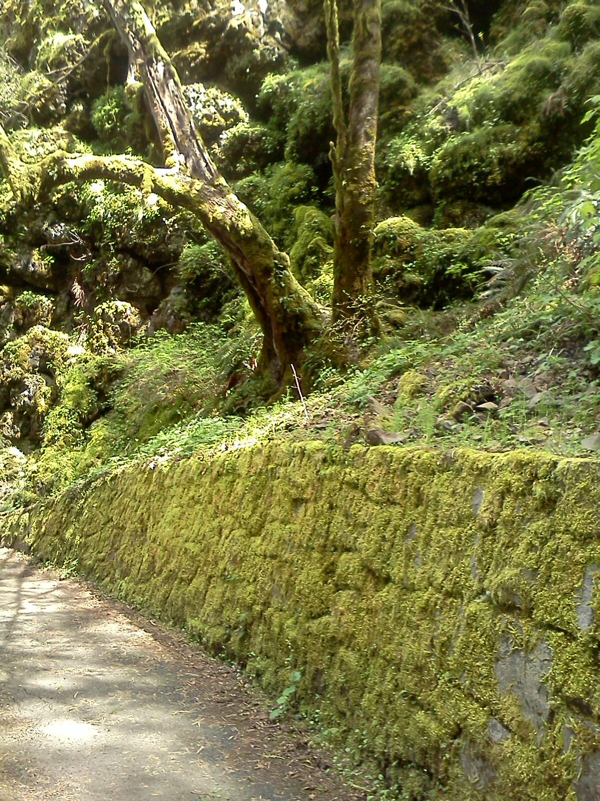 Goddess Canna on Twitter: I love hiking in mossy green